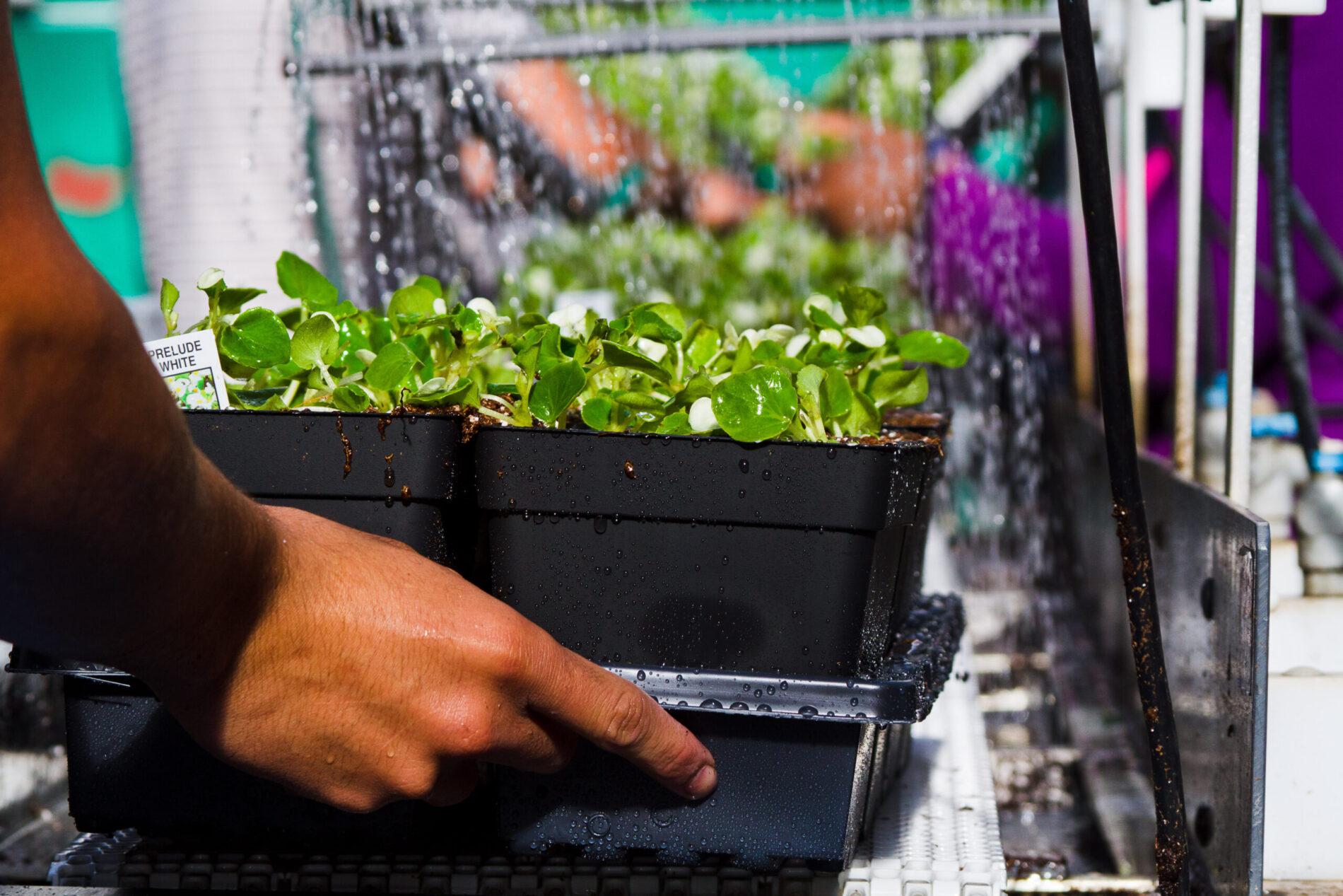 Greenstreet Growers Wholesale Annuals Local Farm Gardening